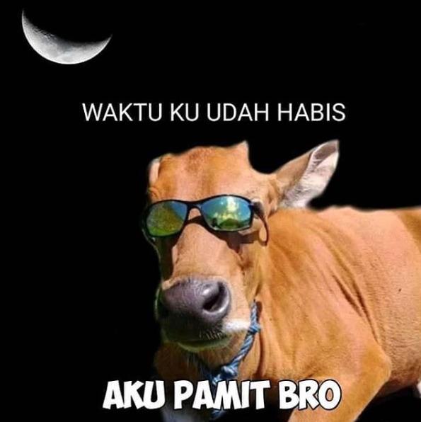 PAP Meme Lucu