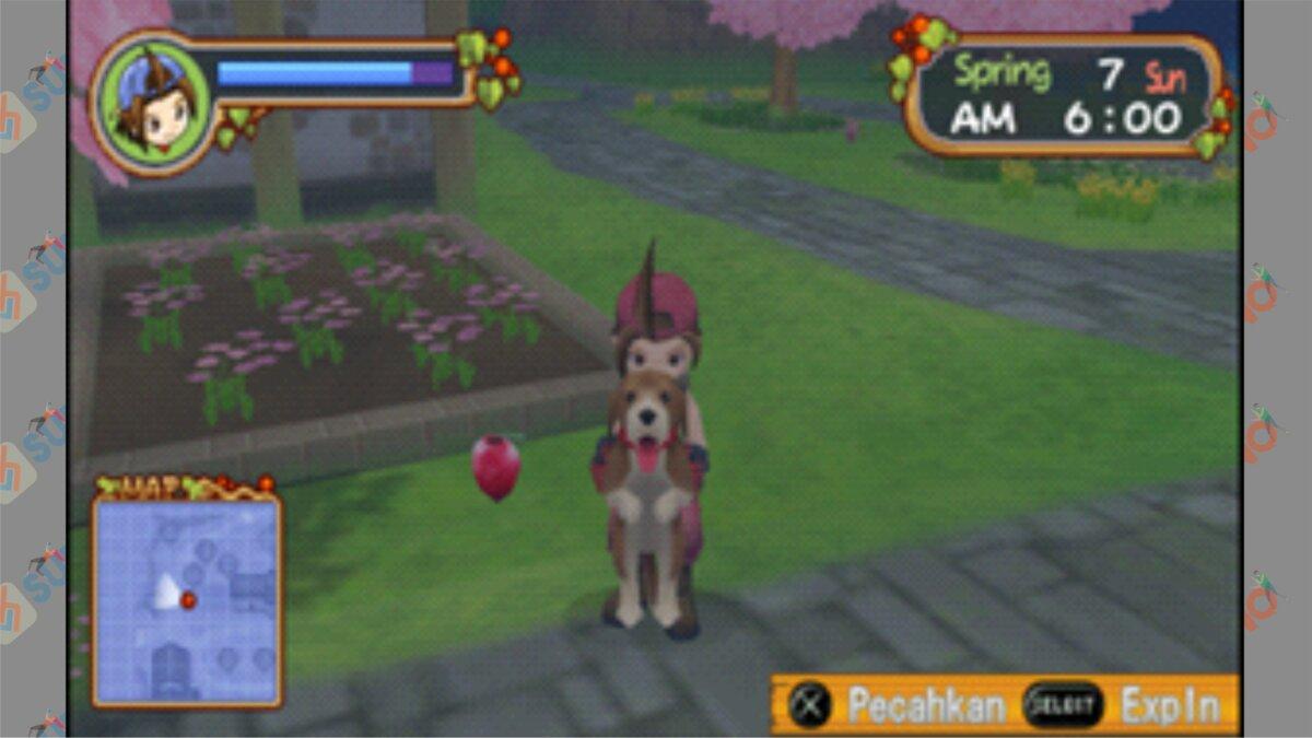 Letak #1 Power Berry Harvest Moon HOLV - Cara Mendapatkan Power Berry Harvest Moon Hero Of Leaf Valley
