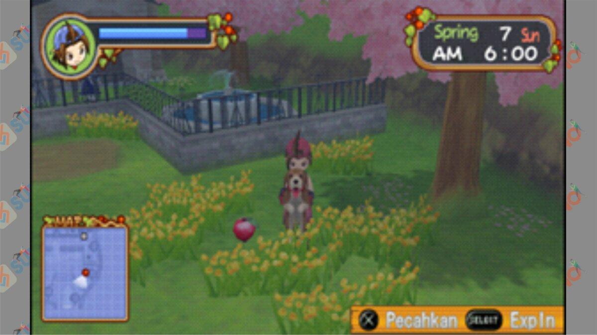 Letak #4 Power Berry HOLV - Cara Mendapatkan Power Berry Harvest Moon Hero Of Leaf Valley