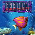Download Feeding Frenzy